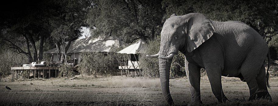 the perfect safari lodge